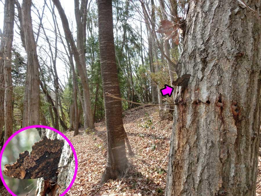もう樹液が出ている_e0253104_2357272.jpg
