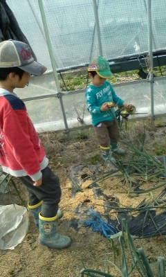 玉ねぎの初収穫だよ。_d0026905_14345551.jpg