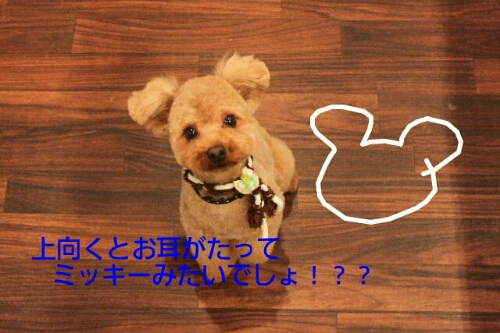 映画化_b0130018_2219157.jpg