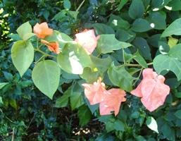 花盛り...でボンmb?_a0043520_2202549.jpg