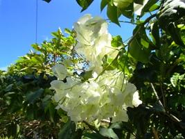 花盛り...でボンmb?_a0043520_2204231.jpg