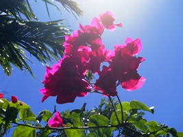 花盛り...でボンmb?_a0043520_220544.jpg
