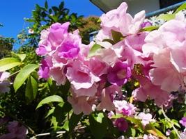 花盛り...でボンmb?_a0043520_2243941.jpg