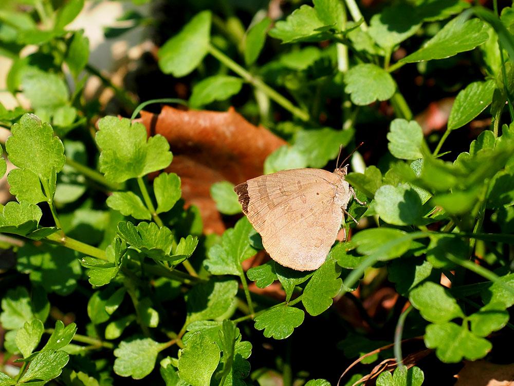 春の林 ホソミオツネントンボの越冬場所訪問_f0324026_19142177.jpg