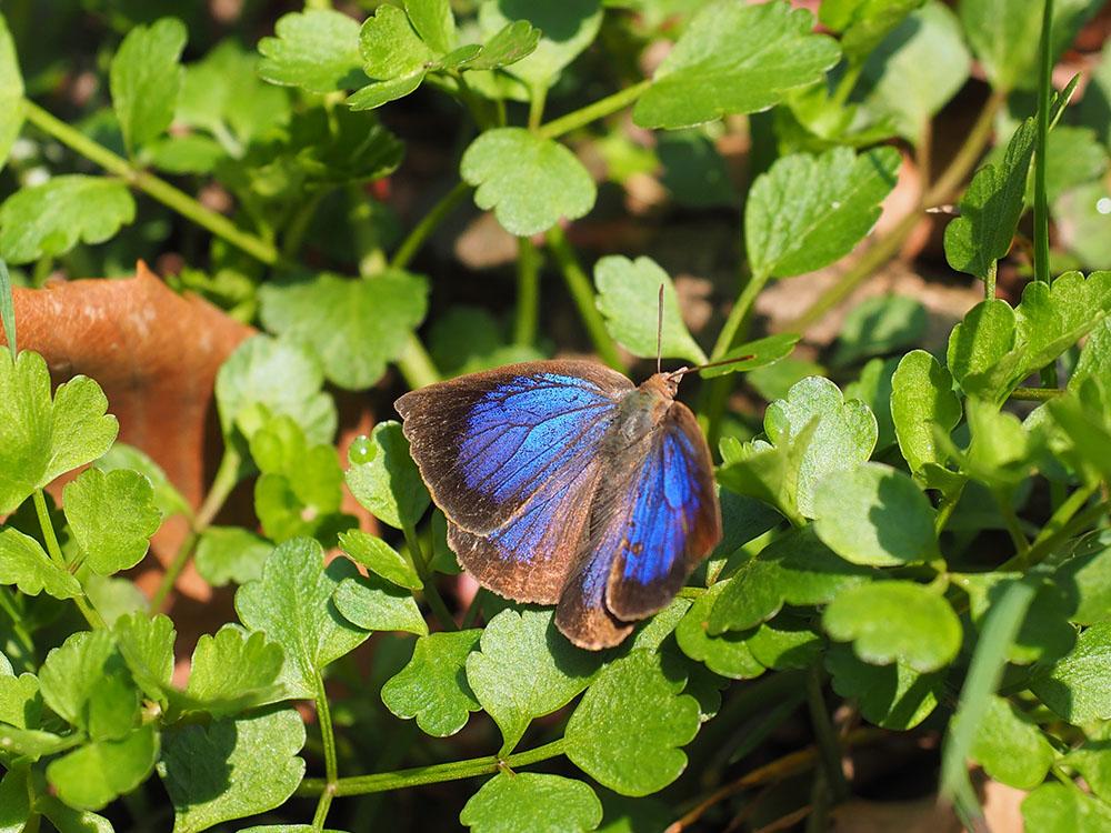 春の林 ホソミオツネントンボの越冬場所訪問_f0324026_19143798.jpg