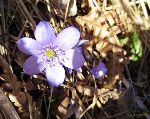 春の散歩_a0086828_251286.jpg