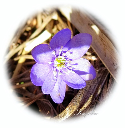 春の散歩_a0086828_2514948.jpg
