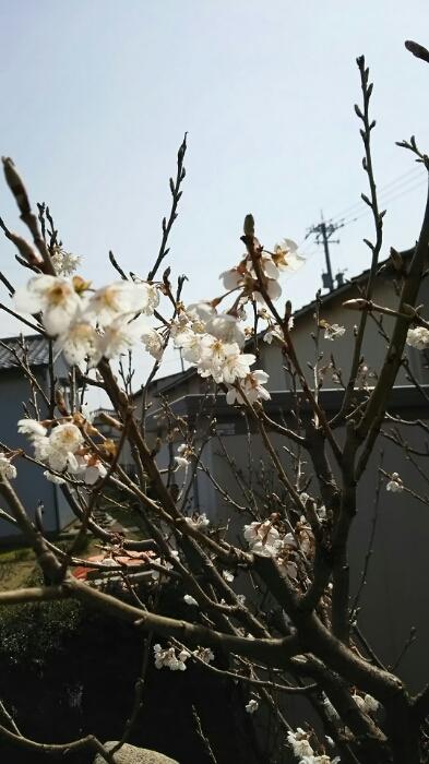 庭の花も春模様_f0114128_16572118.jpg
