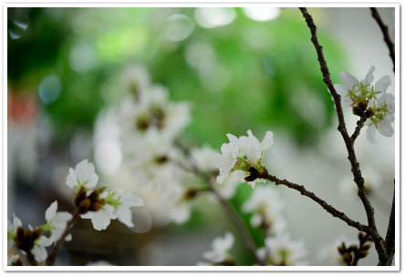 桜色で「はじめまして」のランチパーティー ~パーティーコーディネートクラス_d0217944_21543131.png
