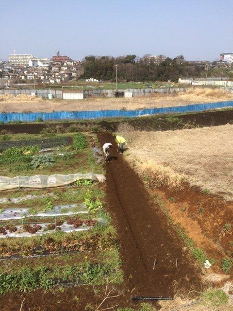 蚕豆の倒れ防止紐を付け インカの目覚めの畝作り 開始しました_c0222448_16062747.jpg