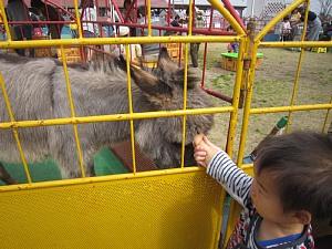 ふれあいいちご動物園開園!_c0141652_8412015.jpg
