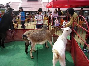 ふれあいいちご動物園開園!_c0141652_841690.jpg