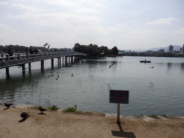 福岡市の大濠公園で汗を流してきました_f0337554_9545893.jpg