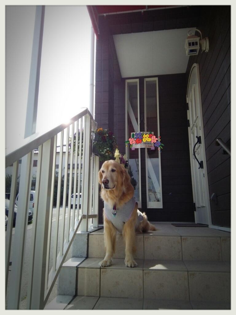 ご愛犬とご一緒に…_d0256356_10300271.jpg