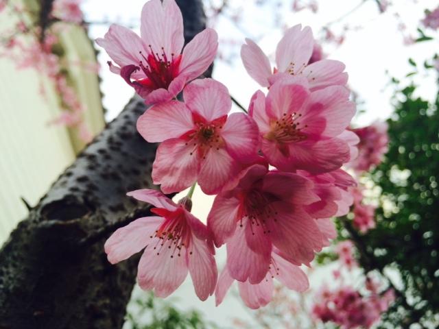 京都へ。炭水化物が好き。_a0050302_145632.jpg