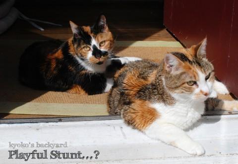 猫たちの一発芸・・・?_b0253205_02544988.jpg