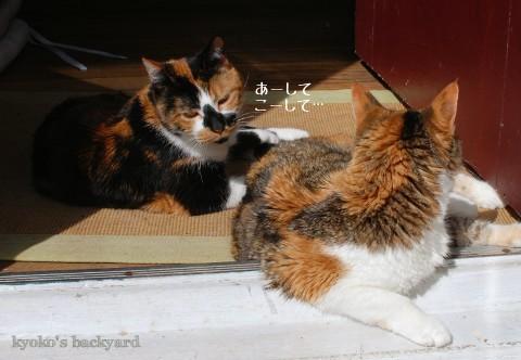 猫たちの一発芸・・・?_b0253205_02571825.jpg