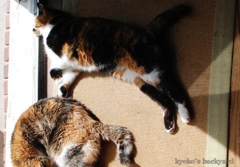 猫たちの一発芸・・・?_b0253205_02580661.jpg