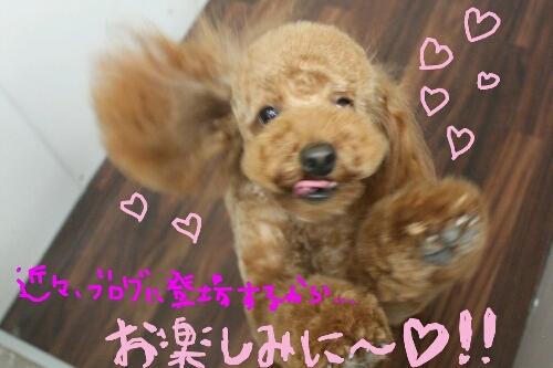 憧れる!_b0130018_1533464.jpg