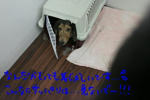 b0130018_15521113.jpg