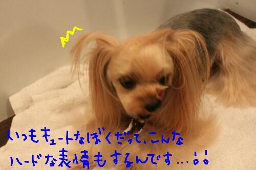 b0130018_16105249.jpg