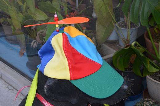 タケコプター帽_a0019819_11102862.jpg