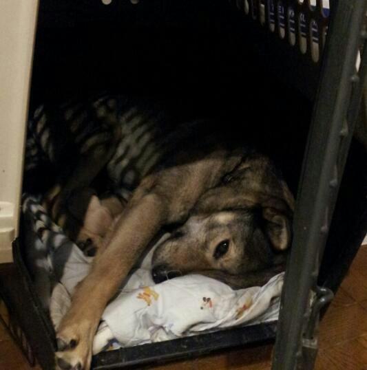 ポプラ そして ホスト犬の宿命_b0207320_12241938.jpg