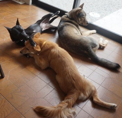 ポプラ そして ホスト犬の宿命_b0207320_12441042.jpg