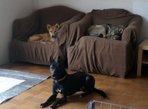ポプラ そして ホスト犬の宿命_b0207320_12504476.jpg