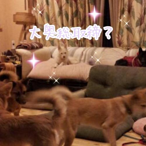 ポプラ そして ホスト犬の宿命_b0207320_13043300.jpg