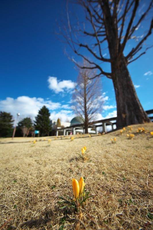 Breath of spring・・・春の息吹・・・_f0333031_06541581.jpg