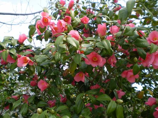 春の訪れをつげるガーデンツリー_f0139333_0495917.jpg