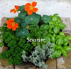 Herb(ハーブ)_c0350941_18520699.jpg