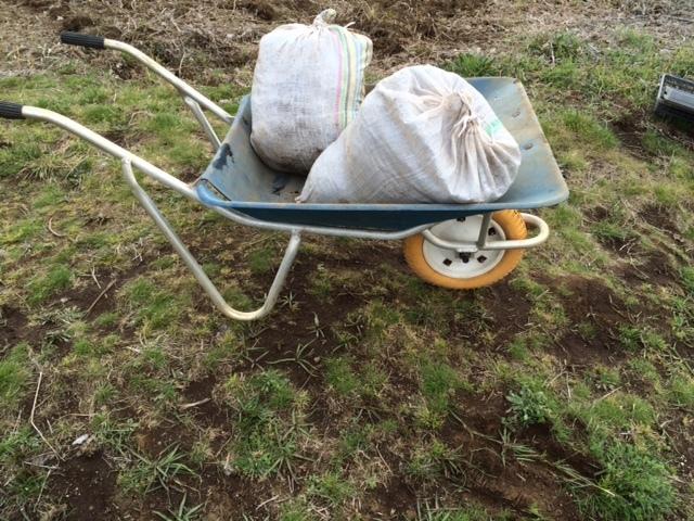 今日は ズッキーニ&トマト&ナス&パプリカの畝の堆肥を運び込みます _c0222448_12344996.jpg