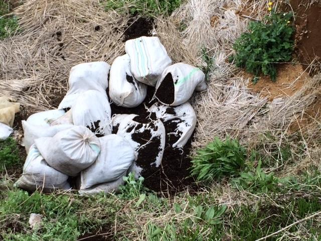 今日は ズッキーニ&トマト&ナス&パプリカの畝の堆肥を運び込みます _c0222448_12350795.jpg