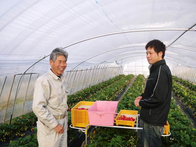 完熟紅ほっぺ 美味さを求めた完熟イチゴと安全を追求した減農薬へのこだわり_a0254656_19404717.jpg