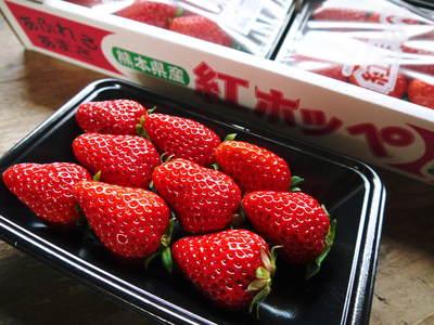 完熟紅ほっぺ 美味さを求めた完熟イチゴと安全を追求した減農薬へのこだわり_a0254656_1949248.jpg