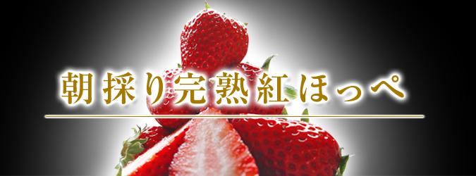 完熟紅ほっぺ 美味さを求めた完熟イチゴと安全を追求した減農薬へのこだわり_a0254656_20192843.jpg