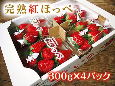 完熟紅ほっぺ 美味さを求めた完熟イチゴと安全を追求した減農薬へのこだわり_a0254656_2065169.jpg