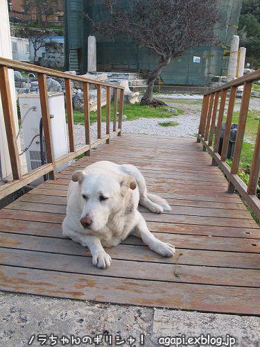 番犬として意識高い系のアルゴ_f0037264_02284712.jpg