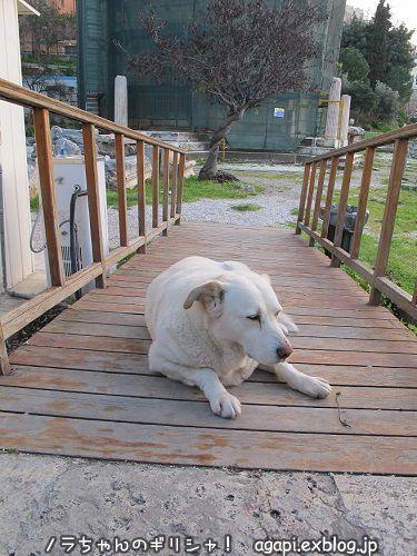 番犬として意識高い系のアルゴ_f0037264_02290484.jpg