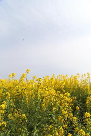 春を見に行って来ました。_f0185066_17575682.jpg