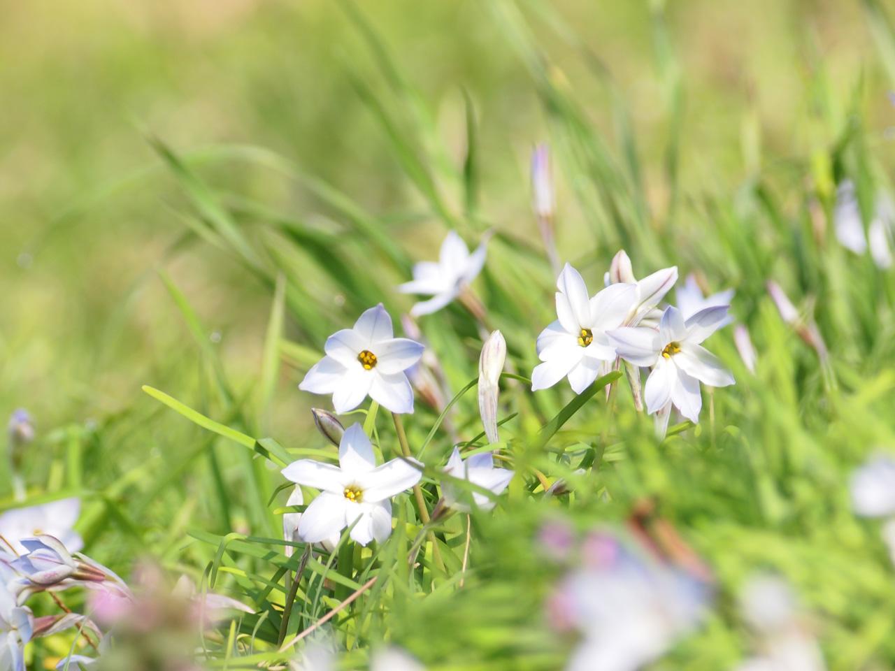 春の・・・_b0021375_22591526.jpg