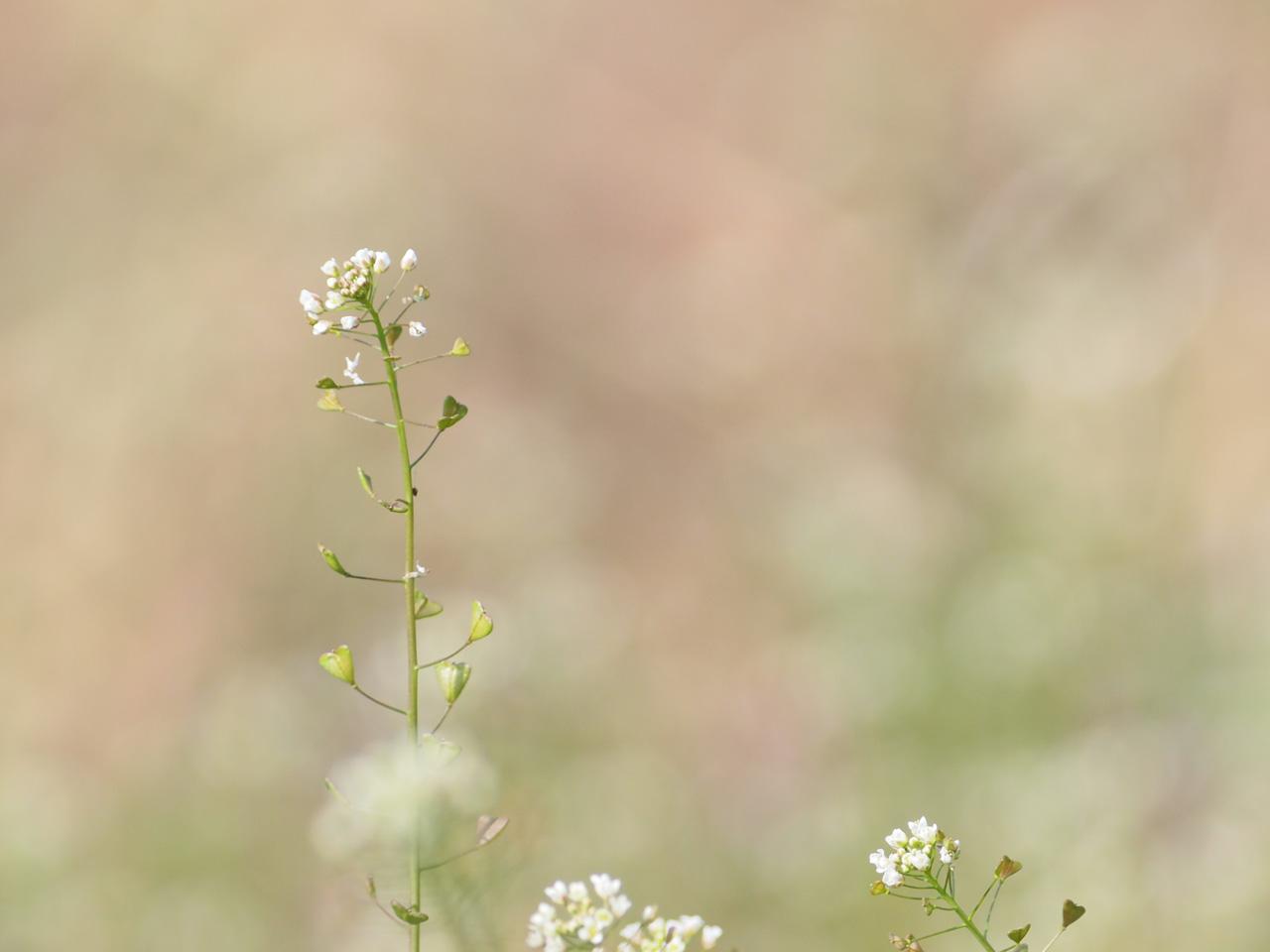 春の・・・_b0021375_22593196.jpg