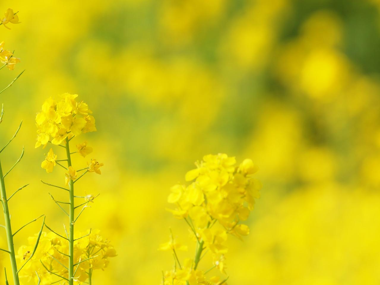 春の・・・_b0021375_22593962.jpg