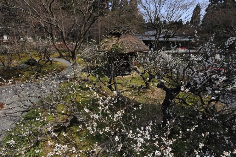 しょうざん庭園_e0051888_6173494.jpg