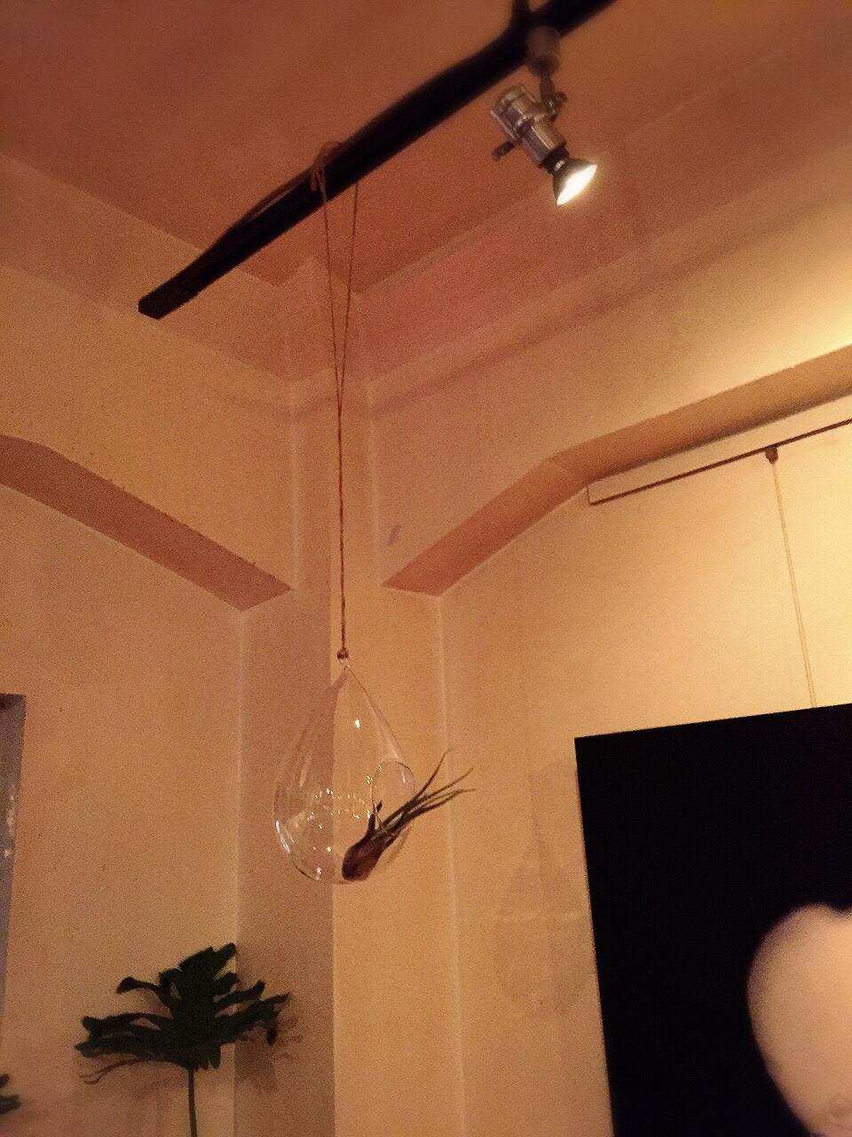カプト メデュエサ &  Hanging Bubble Terrarium Teardr_e0115904_10481717.jpg