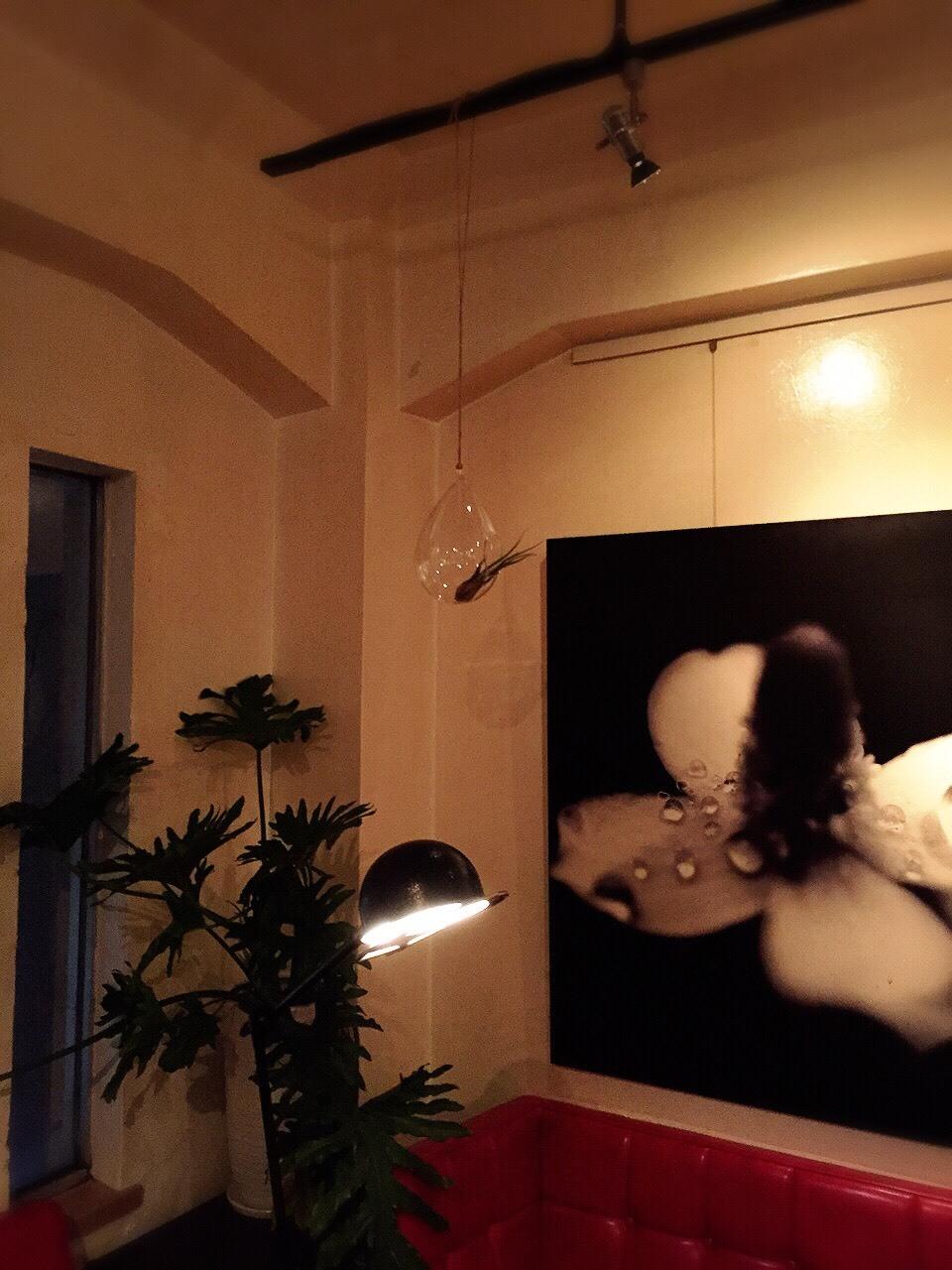 カプト メデュエサ &  Hanging Bubble Terrarium Teardr_e0115904_10482735.jpg