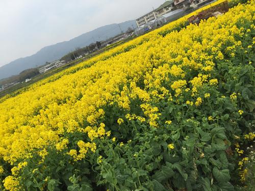 花とチョコ_a0115906_16213117.jpg