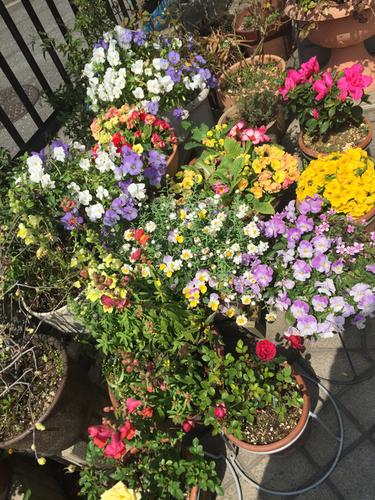 花とチョコ_a0115906_1622365.jpg